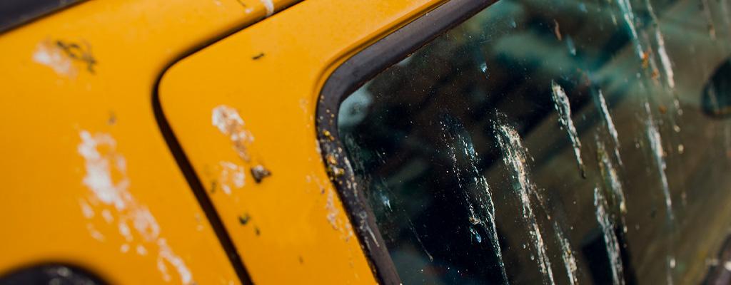 Na fotografiji je avtomobil, ki je umazan s ptičjimi iztrebki.